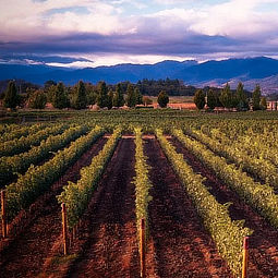 B. Kiley Evans, Winemaker